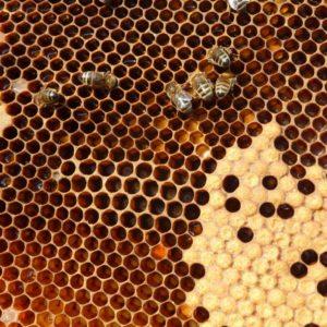 Pollens, Propolis, Pain d'épices
